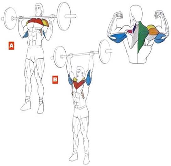 упражнения со штангой дома в картинках помощью сетки