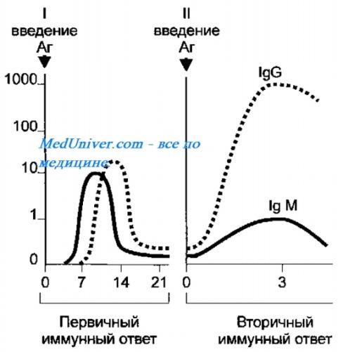 Отличие первичный от вторчного рецептор