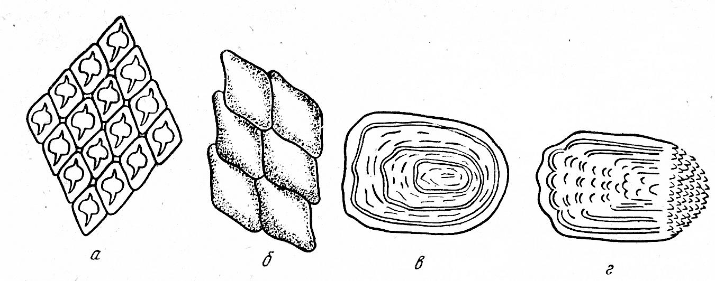 предварительную виды чешуи рыб картинки выпускают специальные