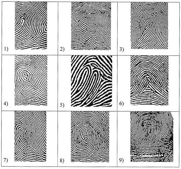 Типы папиллярных узоров пальцев рук картинки стиль современный