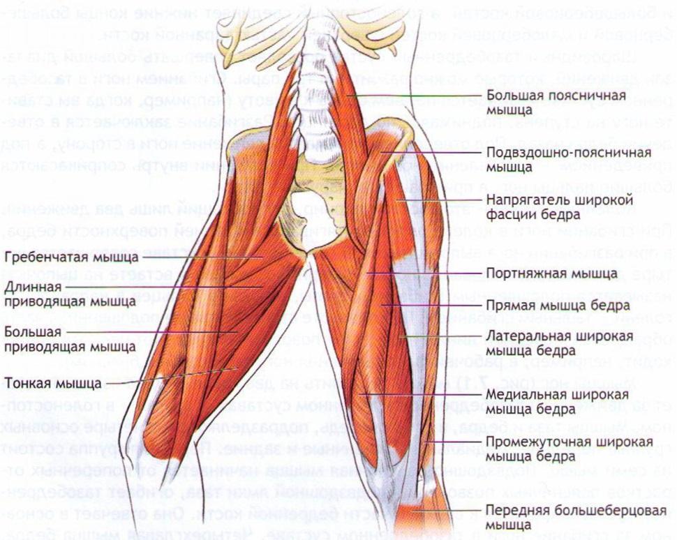 Мышцы производящие движения локтевом суставе блокады суставов гиалуроновой кислотой