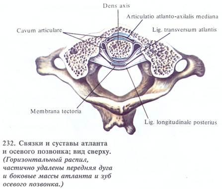 Латеральный атлантоосевой сустав форма медецинский прибор для лечения суставов
