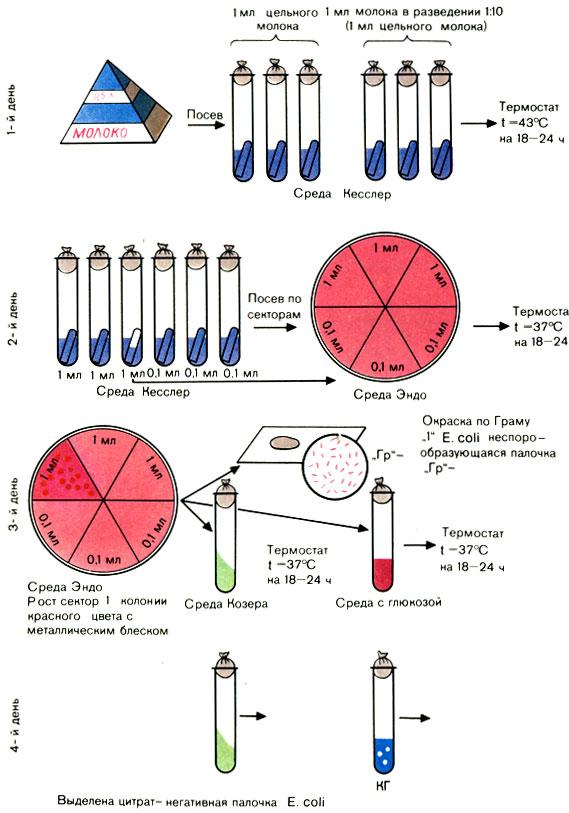 микрофлора воды реферат