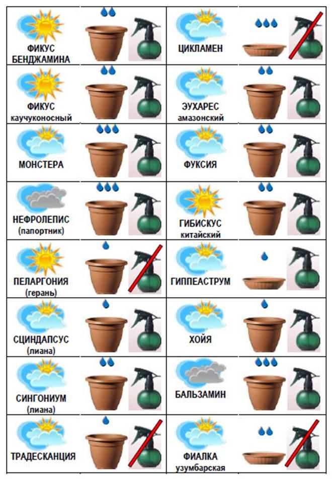 Значки по уходу за растениями картинки