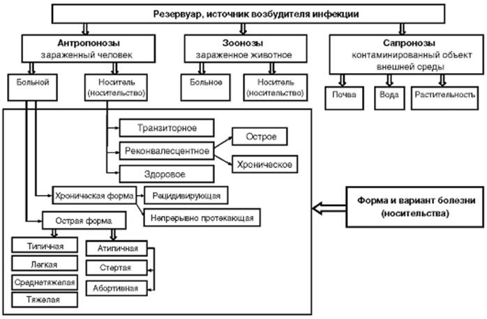 На эпидемический процесс влияют фенотипическая гетерогенность микроорганизма