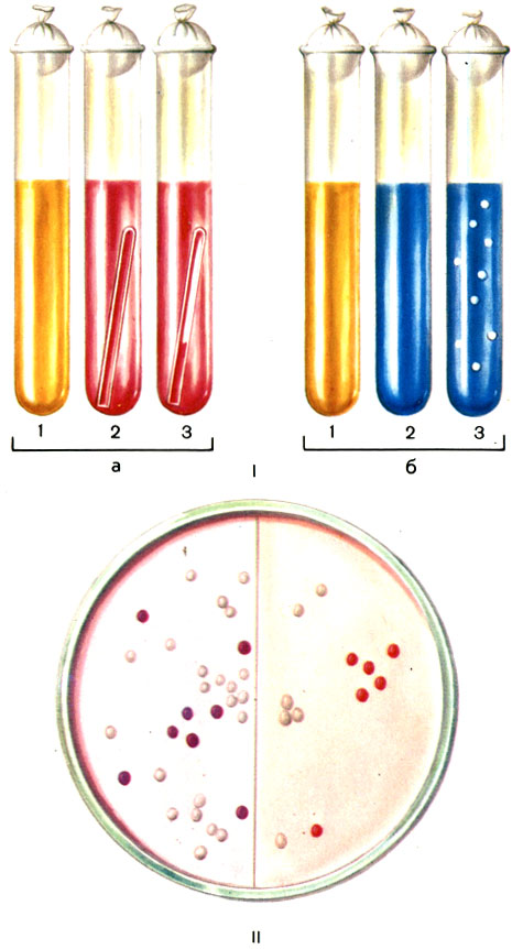 carbohydrate substrates on yeast
