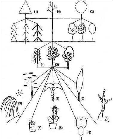 несколько интерпретация рисунка дерева в психологии регистрации без