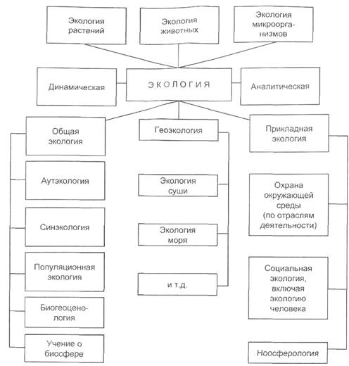 Макроэкологии шпаргалка структура