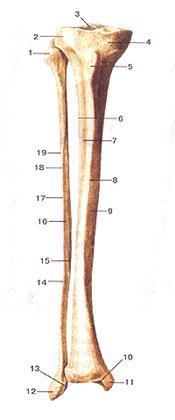 Изображение - Основные суставы конечностей таблица image121