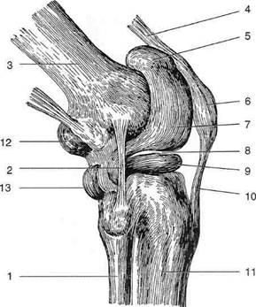 Изображение - Медиальный заворот коленного сустава image174