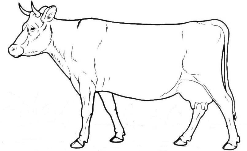 коровы в картинках схема изначальная цена