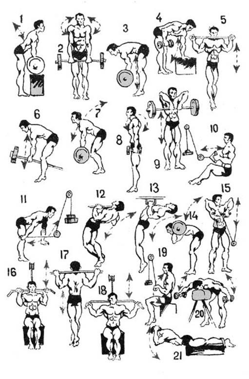субпродукты имеют упражнения для развития мышц с картинками которые способны по-настоящему