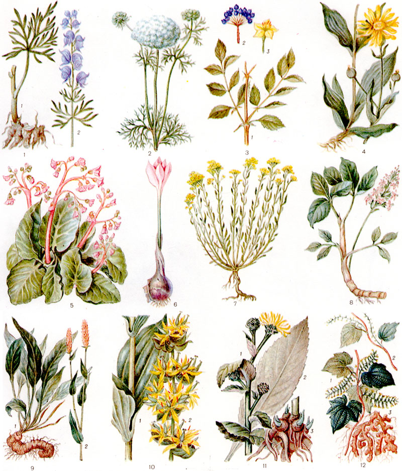 Картинки лекарственных цветов с названиями