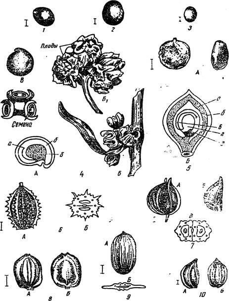Картинки плоды семена овощи