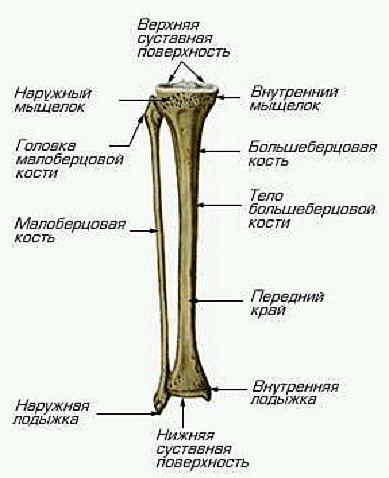 лета время больберцовой кости внизу ноги для цветотипа