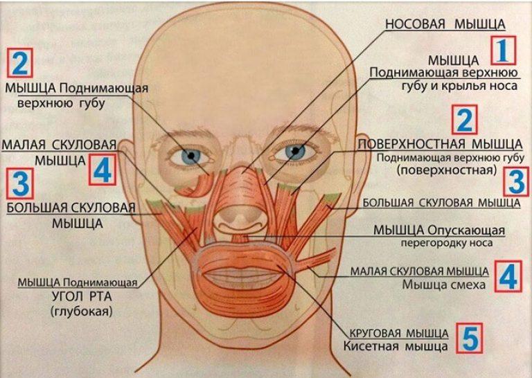 термобелье шерсти проявление гипертонуса лицевых мышц это