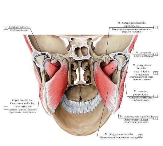 Артроз челюстно-лицевого сустава, лечение артроза челюсти