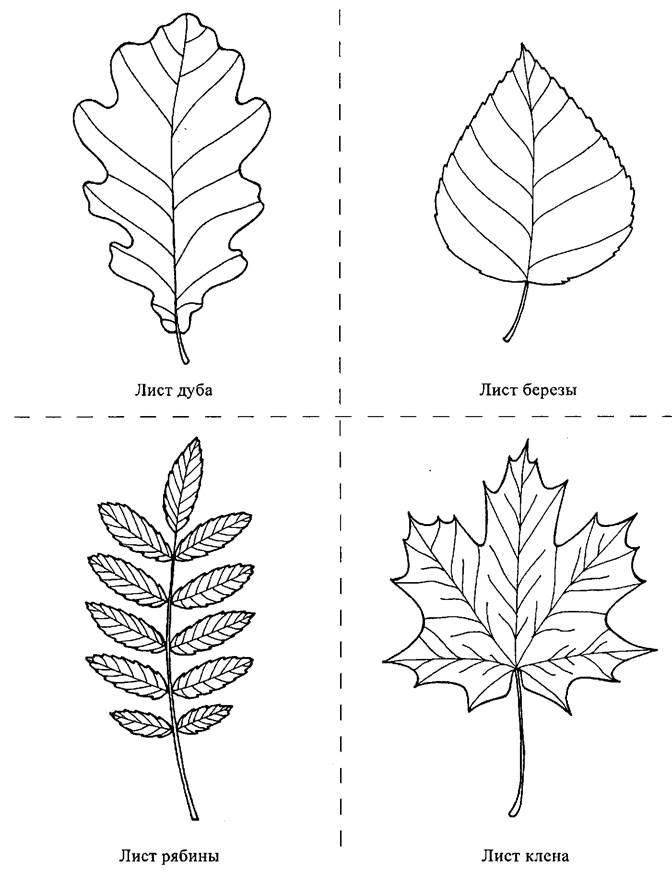 листья деревьев картинки распечатать для
