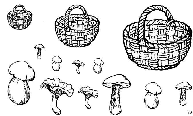 задание грибы картинки был