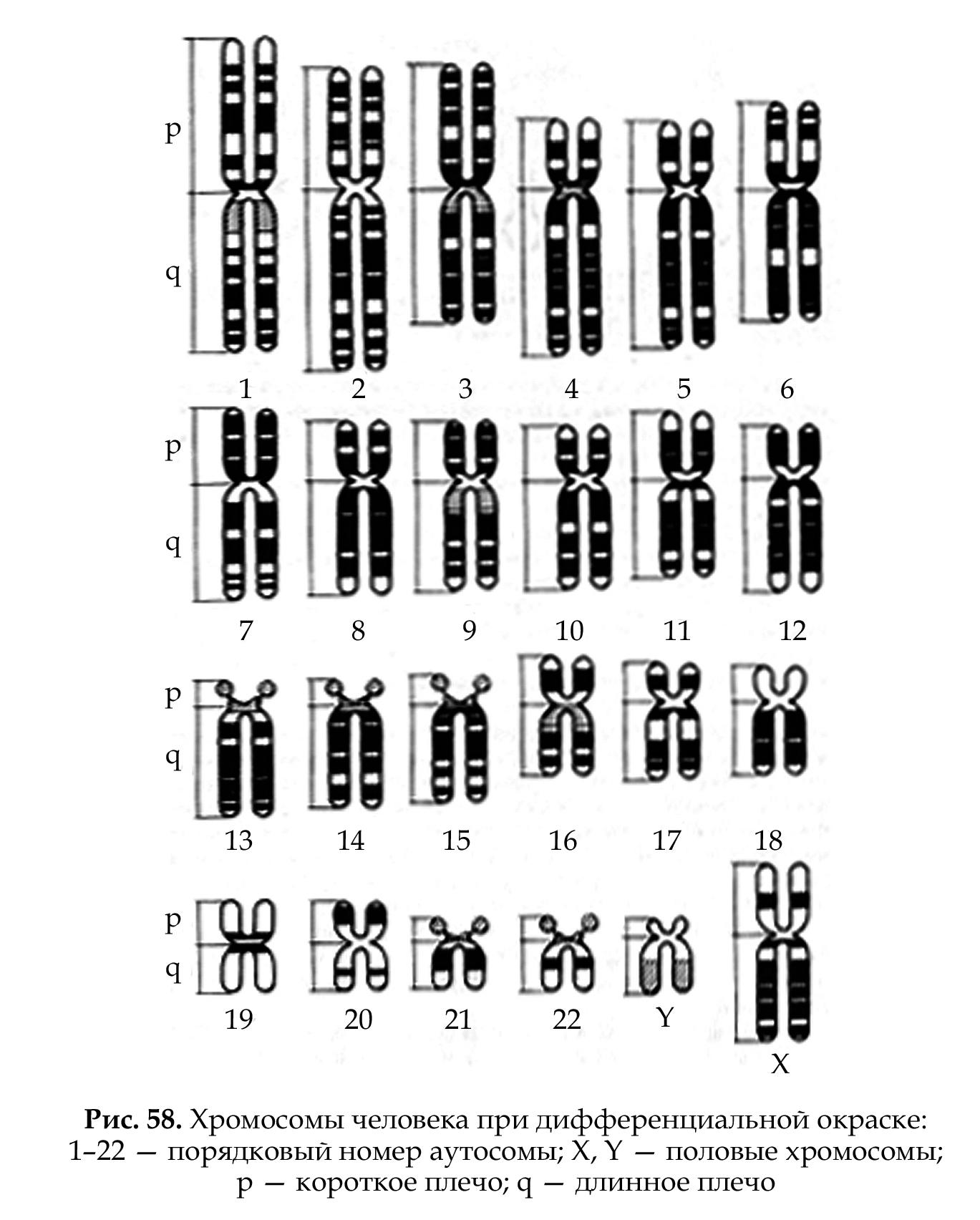 место занимаемое геном в хромосоме