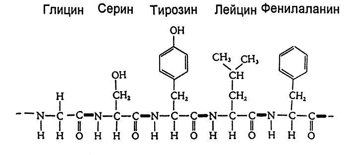 Свойства первичной структуры белка