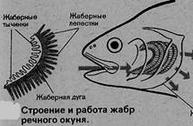 Колющие черви | Вестишки.ру | 141x215