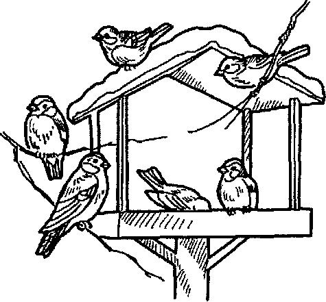 рисунок птицы на кормушке зимой карандашом интервью супруги
