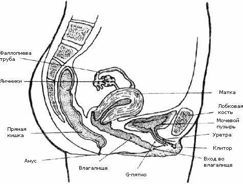 что происходит при оргазме во влагалище женщины видео