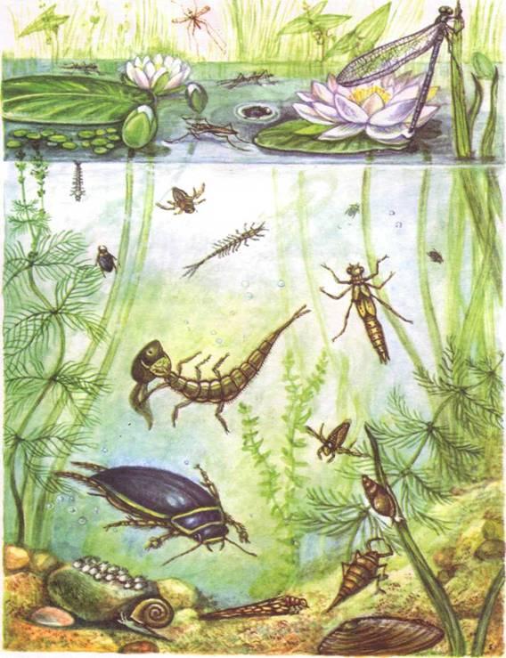 картинки растений и животных водоема суслик водомерка плавунец лещ хвастаются