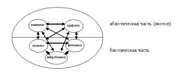 Трофический уровень определяется как совокупность