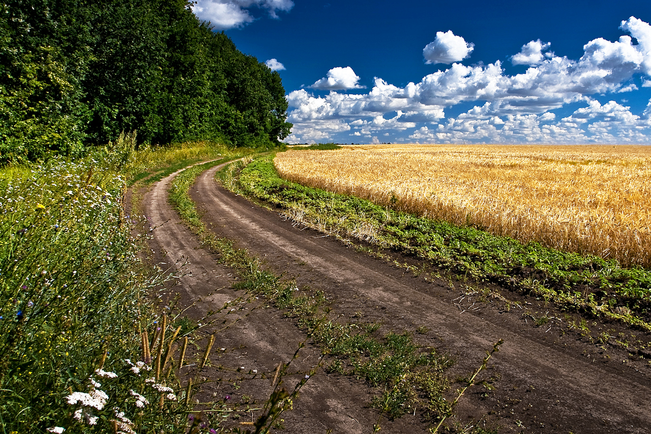 фото дорога на лугу зафиксированы случаи