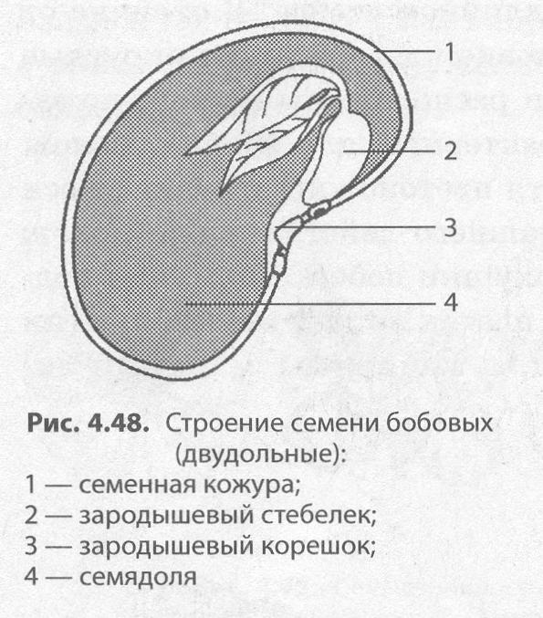 Зародыш цветка это