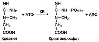 Характеристика изоферментного спектра креатинкиназы
