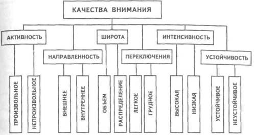 психология виды внимание схема
