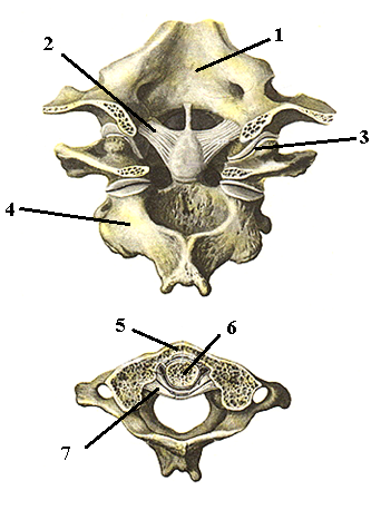 Латеральный атлатноосевой сустав как лечить суставы кедровой настойкой
