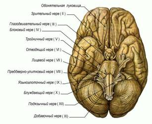 васильев пробуждение разума или как стать личностью формат doc
