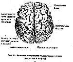 Неврологические основы патологии речи при заикании