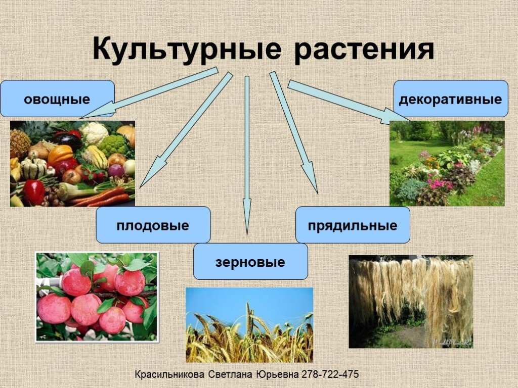 нередко ругают культурные растения примеры фото экзотический