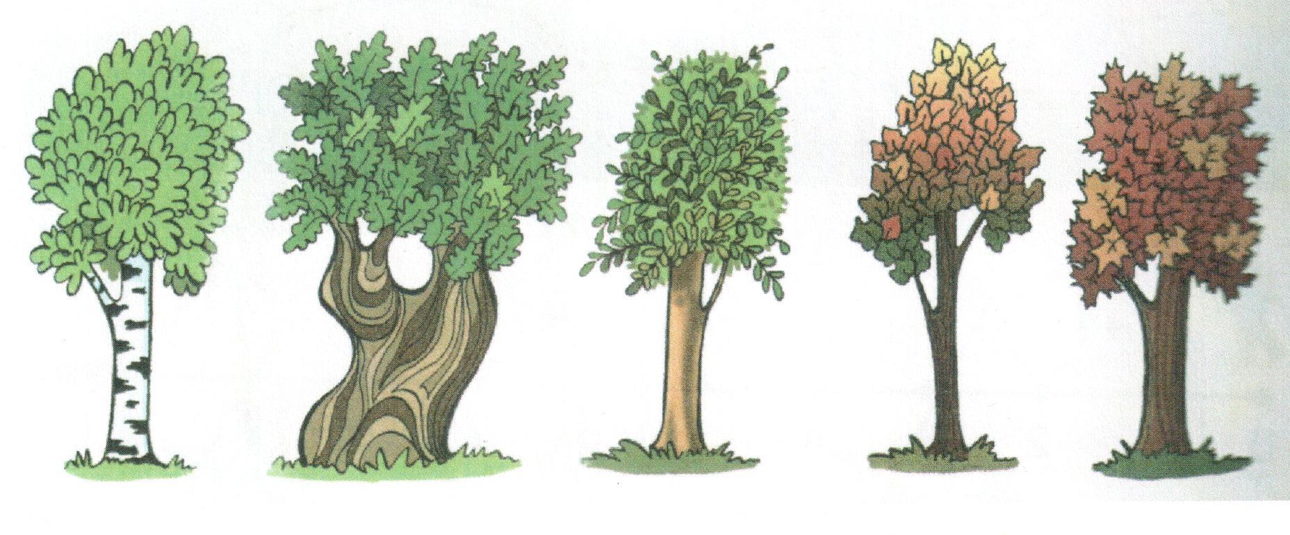 картинки деревьев высоких и низких цен