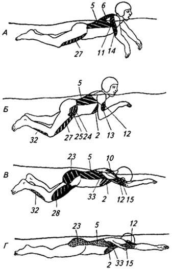 помощью плавание кролем какие мышцы работают фото пиппа