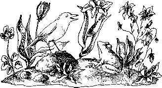 Жаба и роза картинки для детей